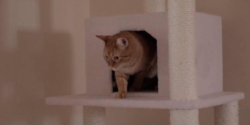 Detailed review of Armarkat Cat Tree Furniture Condo