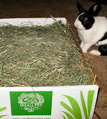 Review of Small Pet Select Timothy Hay Pet Food