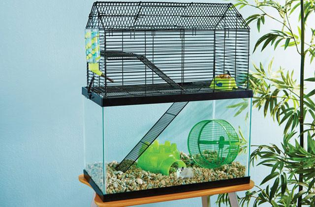 Best Hamster Cages, Houses and Habitats