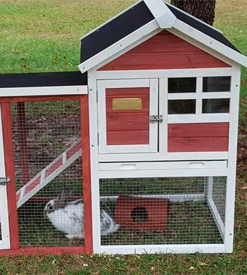 Review of Advantek Stilt House Rabbit Hutch