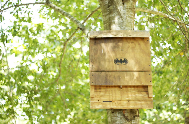 Best Bat Houses