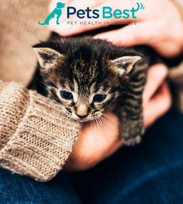 Review of Pets Best Pet Insurance for Dogs and Cats