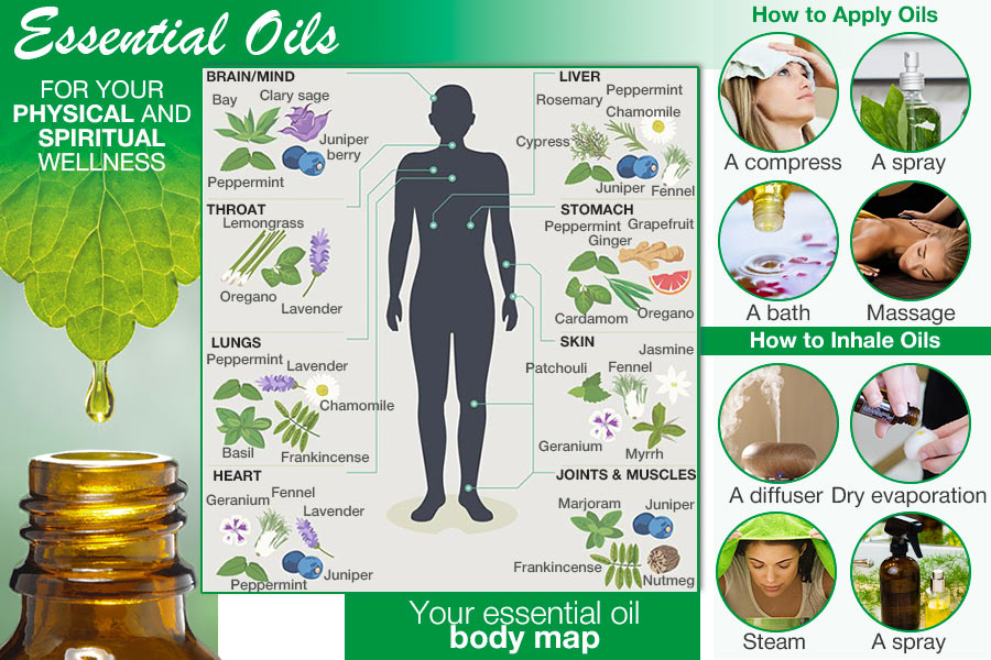 Comparison of Essential Oils for Wellness, Balance, and Beauty