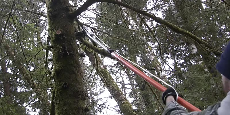 Review of Fiskars Extendable Tree Pruner