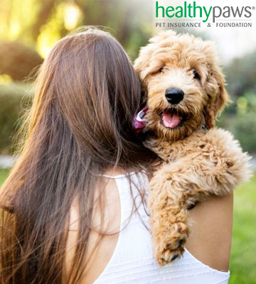 Review of Healthy Paws Pet Insurance