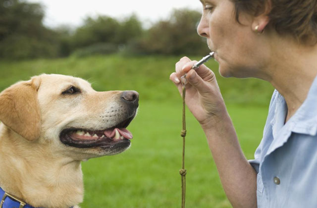 Best Dog Whistles to Curb Bad Dog Behavior