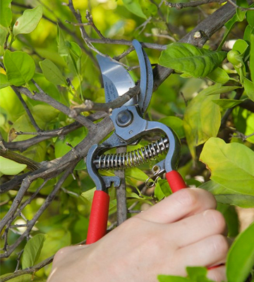 Review of Corona BP 3180D ClassicCUT Forged Bypass Hand Pruner