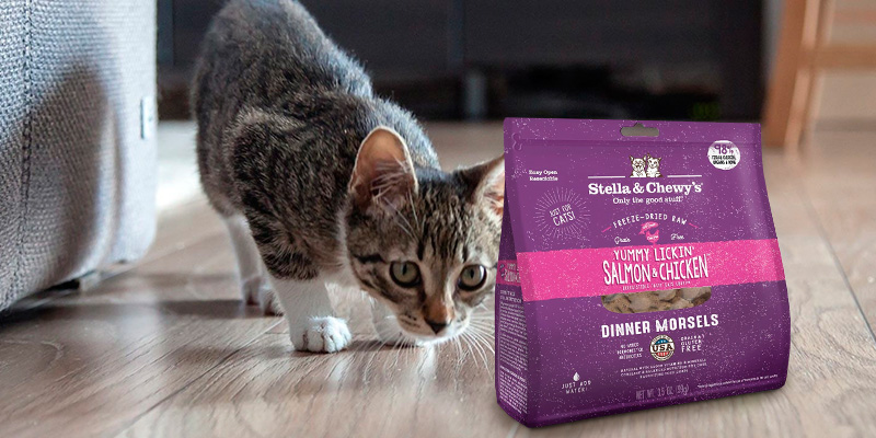 Review of Stella & Chewy's Freeze-Dried Raw Dinner Morsels for Cats