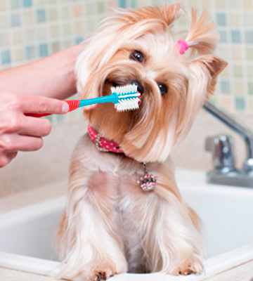 Review of Petrodex Sentry Dental Care Kit for Adult Dogs