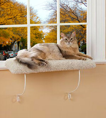 Review of Lazy Pet Deluxe Cat Window Perch