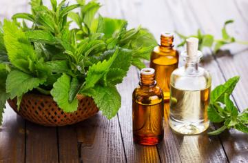 Best Peppermint Essential Oils for Refreshing and Recovering