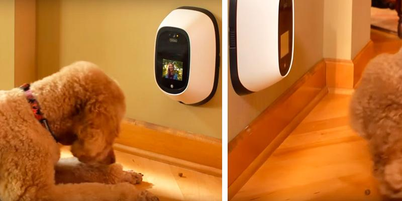 PetChatz HD 2-Way Pet Cam with Calming Scent in the use
