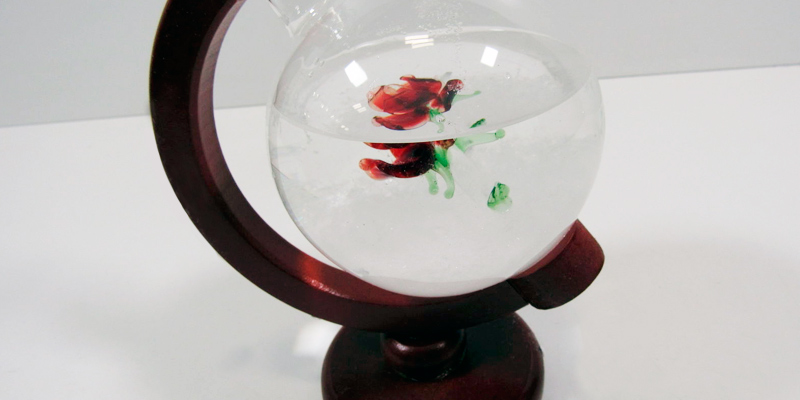 Review of Aolvo Storm Glass Globe Weather Glass with Rose Inside