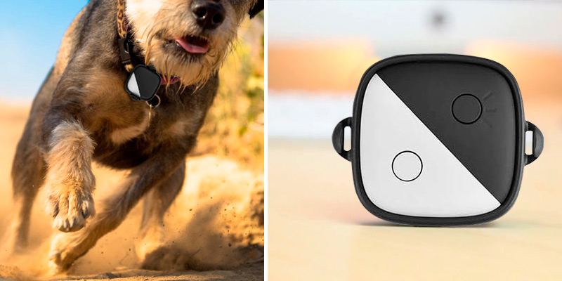 Review of PetFon Pet GPS Tracker Real-Time Tracking Collar Device