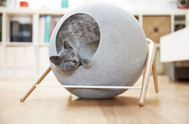 Best Cat Beds