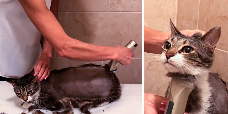 Review of Wahl Professional Animal Arco Pet Cordless Clipper Kit