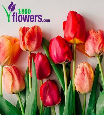 Review of 1-800-Flowers Fresh Flowers Online