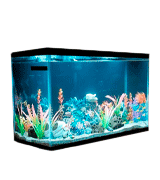 Aqueon 100528607 10 Gallon Aquarium