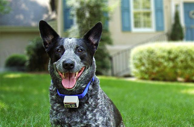 Best Pet Electric Fences