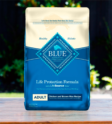 Review of Blue Buffalo 11 Protection Formula Adult Dry Dog Food
