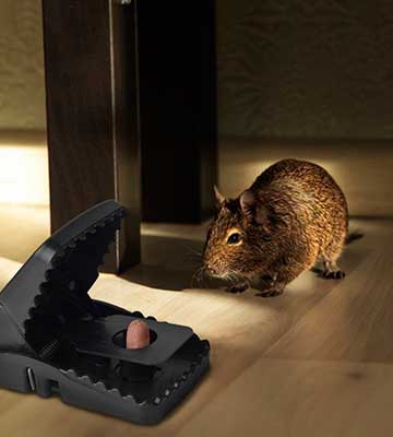 Review of LEHOUR Mouse/Rats Trap