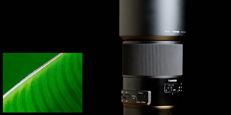 Review of Tamron SP 90mm F/2.8 Di VC USD 1:1 Macro