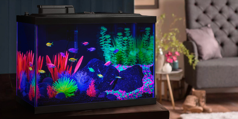 Review of GloFish NV33823 20 Gallon Aquarium Kit Fish