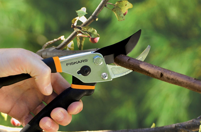 Comparison of Pruning Shears for Precision Pruning Tasks
