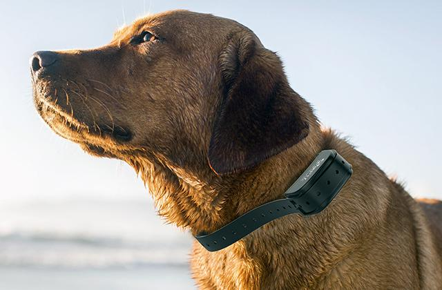 Comparison of Bark Collars to Control Your Dog's Excessive Barking and Unwanted Behavior