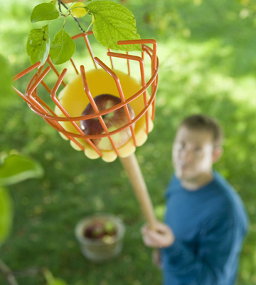 Review of Flexrake LRB189 Fruit Picker with 8-Foot 2-Piece Wood Handle