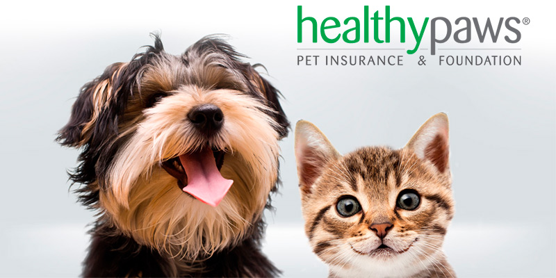 Detailed review of Healthy Paws Pet Insurance