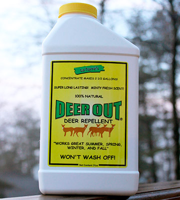 Review of Deer Out 32oz Concentrate Deer Repellent