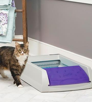 Review of PetSafe ScoopFree Automatic Self Cleaning Litter Box