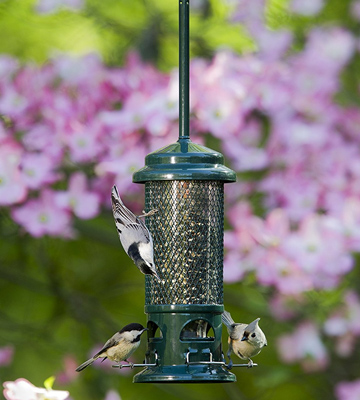 Review of Brome 1057-V01 Squirrel Buster Standard Wild Bird Feeder with 4 Metal Perches