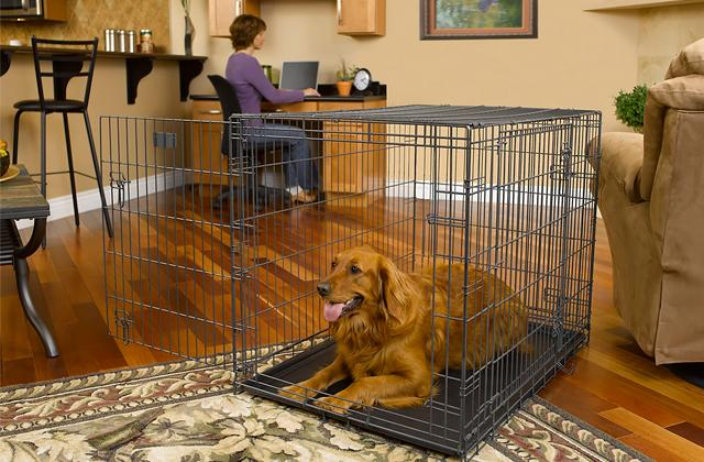 Pet Cages & Crates