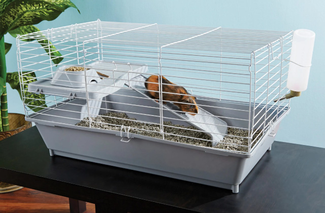 Best Guinea Pig Cages