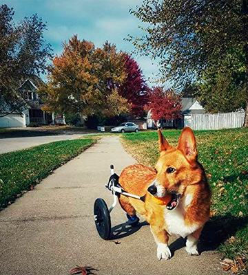 Review of K9 Carts The Original Dog Wheelchair