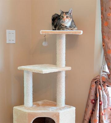 Review of Go Pet Club Cat Tree Beige Color