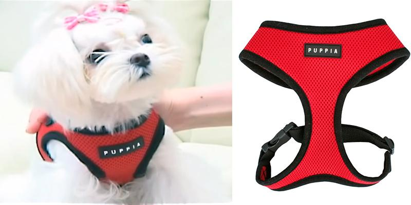 Puppia Soft Dog Harness in the use