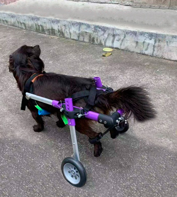 Review of SYLPHID Adjustable Dog Wheelchair