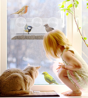 Review of Nature's Hangout Window Bird Feeder with Removable Tray, Clear Acrylic