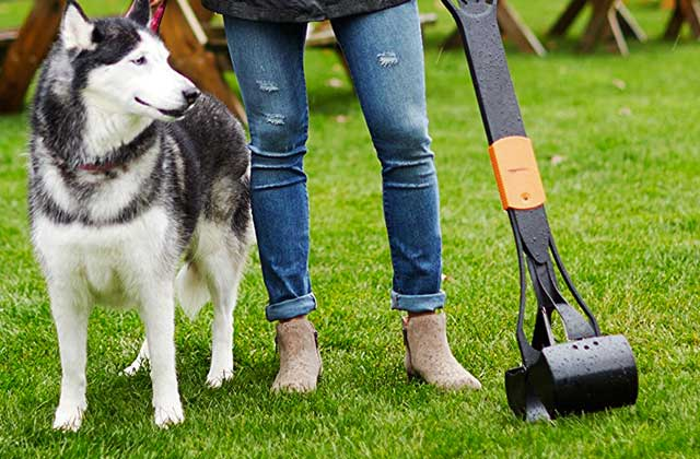 Best Pooper Scoopers for Mess-free Dog Waste Collecting