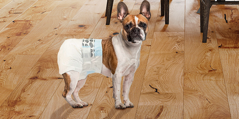 Review of Simple Solution Disposable Dog Diapers