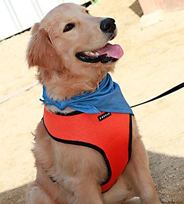 Review of Puppia Soft Dog Harness