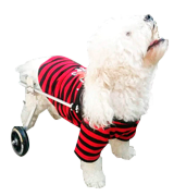 Anmas Sport Adjustable Pet Wheelchair