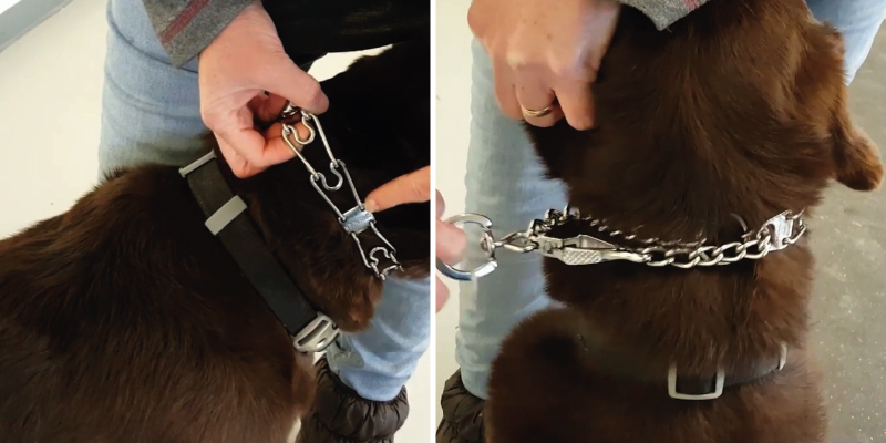 Review of HS HERM. SPRENGER GERMANY Ultra-Plus Prong Dog Training Collar