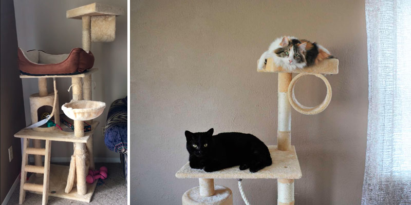 Review of Go Pet Club Cat Tree Furniture
