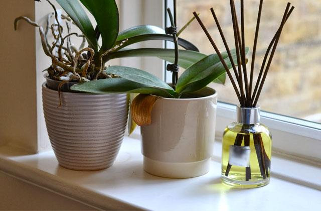 Best Oil Reed Diffusers to Add a Pleasant Fragrance to Your Place